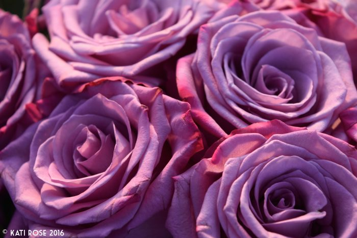 Mourning Minnesota's Prince Roses